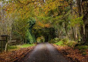 Коли под наем Омаг, Северна Ирландия