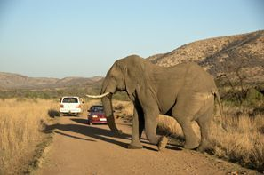 Коли под наем Клерксдорп, Южна Африка