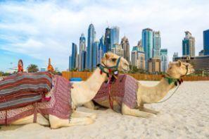 Alugar um carro em Emirados Árabes Unidos