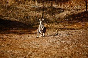 Sewa mobil Tamworth, Australia