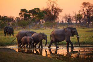 Rental mobil Botswana