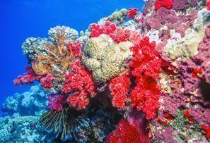 Sewa mobil Coral Coast, Fiji